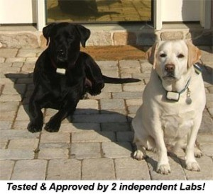 labs