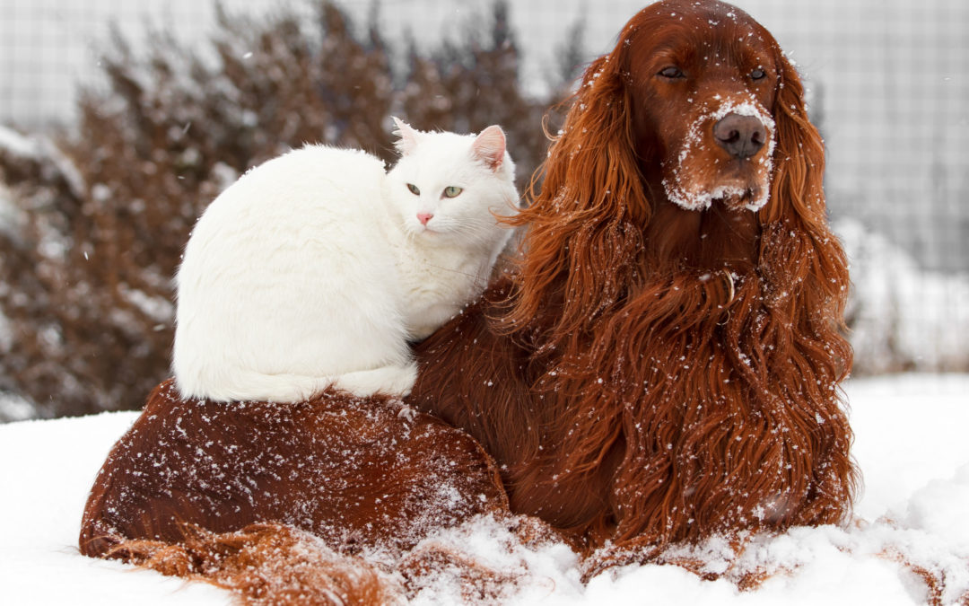 Keeping Your Pet Safe And Warm This Winter