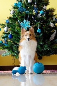Holiday Trees And Your Pets