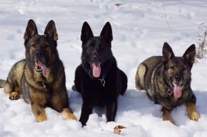 Ways to Protect Pets This Winter