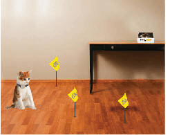 Pet Fence Training
