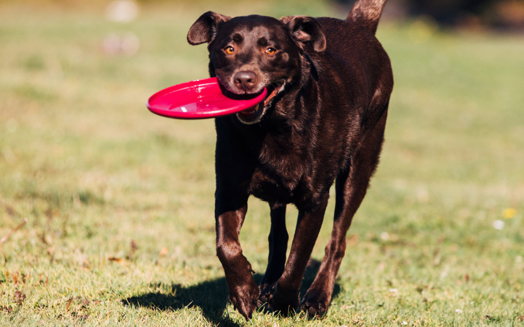 5 Tips to Keeping your Pet Healthier Longer