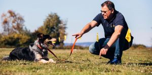 Training dog with electric fence