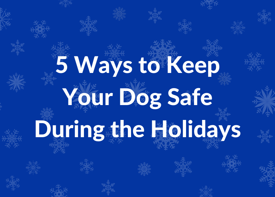 5 Ways to Keep Your Dog Safe During the Holidays